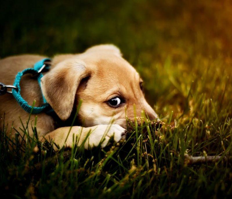 dog-2393078_1280-1184x790